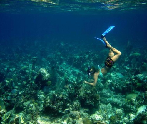 Andros-Barrier-Reef-and-Islands-Bahamas-564x422