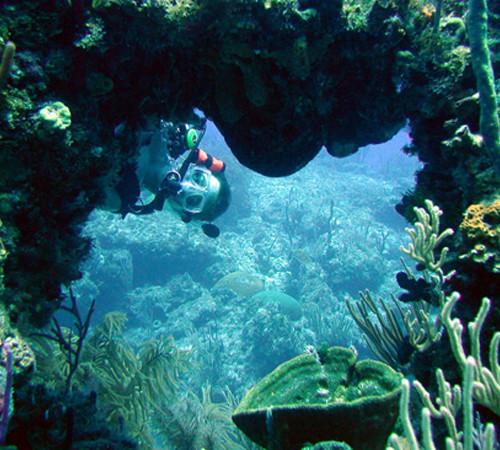 Bahamas-Diving-in-Bimini