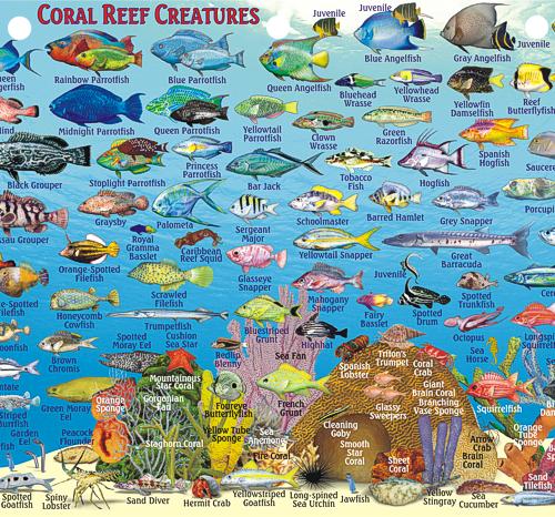 BahamasFishCardGreatExumaSide2