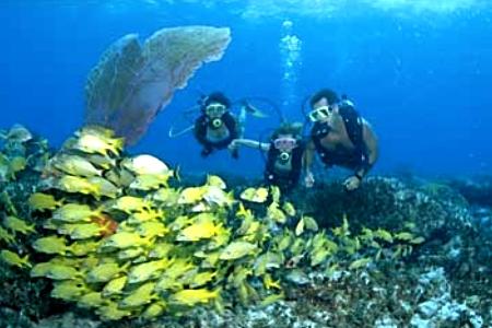 Bimini-Islands-diving