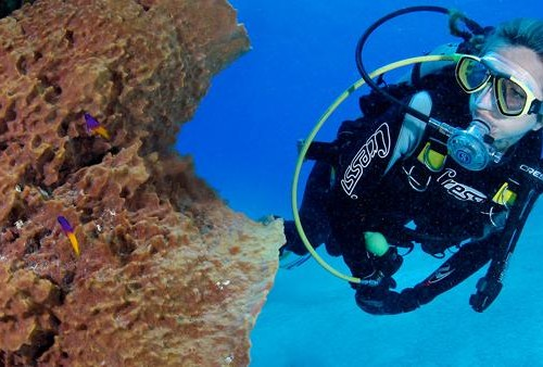 Diving_Exumas_HEAD