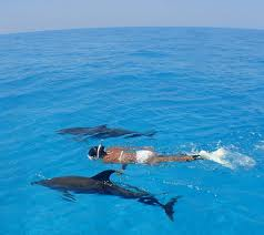 Dolphin-Encounter-Blue-Lagoon