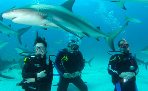 Shark%20Diving%20in%20Nassau,%20New%20Providence%20Island,%20Bahamas