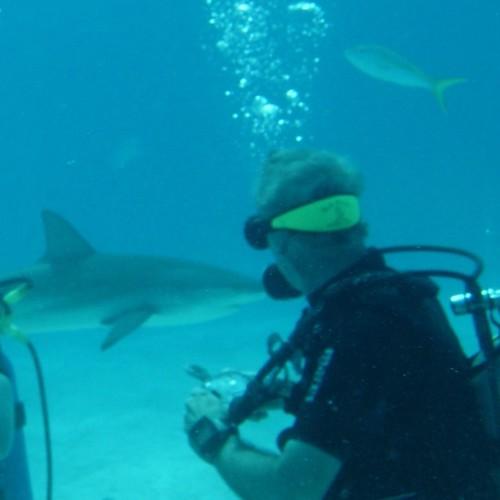 Stella-Maris-Resort-shark-diving2-Long-Island-Bahamas