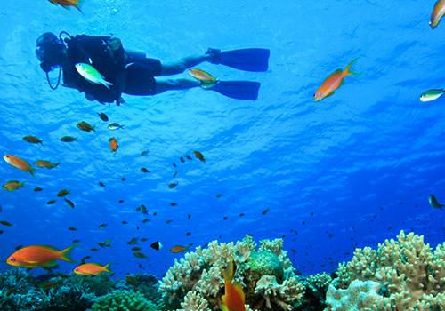 bahamas-scuba-diving (1)