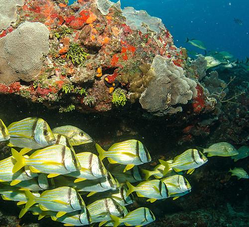 bimini-diving