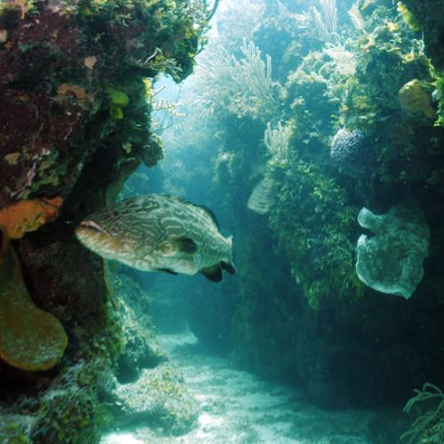 black_grouper_cave