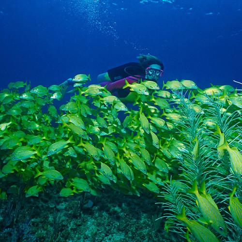 caribbean_bahamas_bimini_big_game_club_resort_gallery_dive_fish