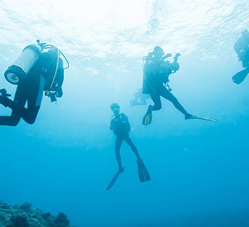 cat-island-diving