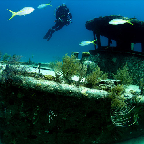diving-on-grand-bahama
