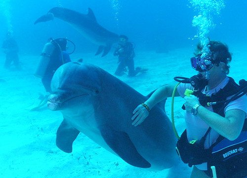 diving-with-dolphins