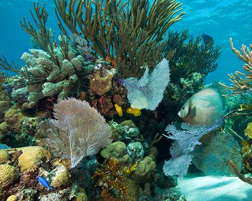 exuma-coral-332x190