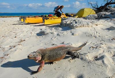 kayak_iguana