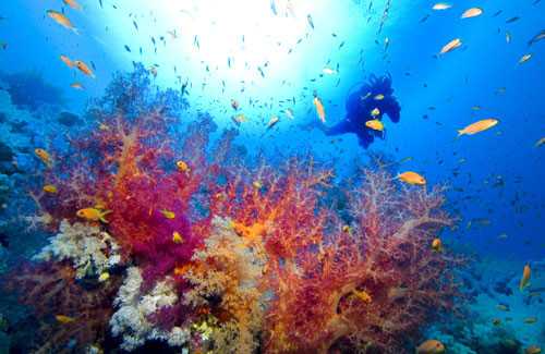 scuba-coral
