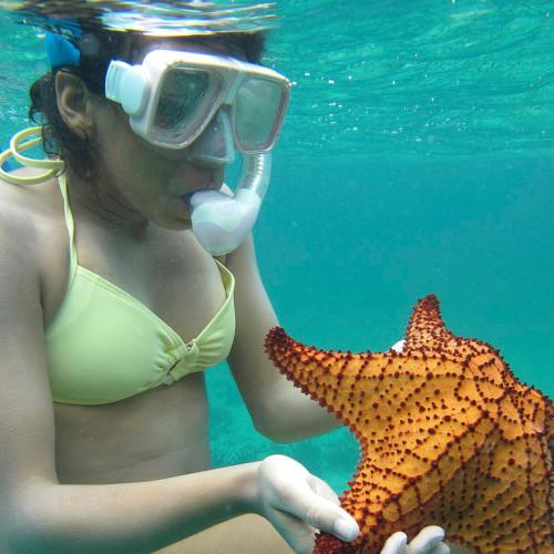 snorkeling-bahamas-marine-biology