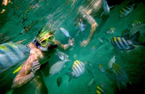 staniel-cay-snorkel3