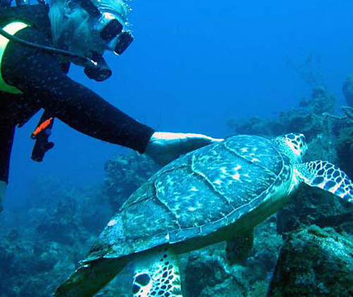 the-sands-at-grace-bay-scuba-diving-tortoise
