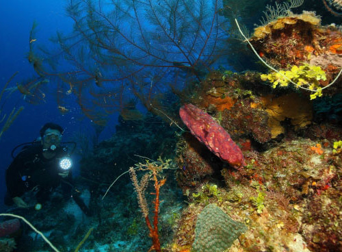 underwater-diver-scuba-diving-wall-coral-reef-bahamas