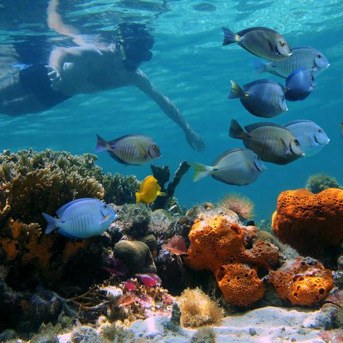 BOI-Bahamas-Snorkeling