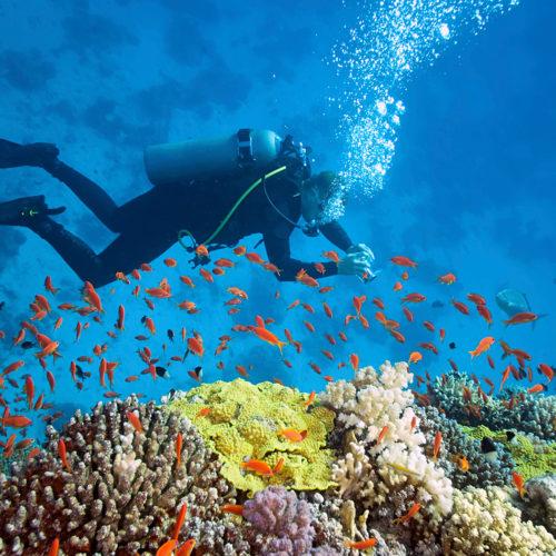 BOI-Bahamas-fishes-diving