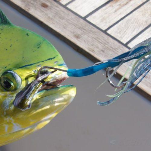 Yachts-Riviera-Maya-Deep-Sea-Fishing-Dolphin-Fish-Dorado-Mahi-Mahi-4
