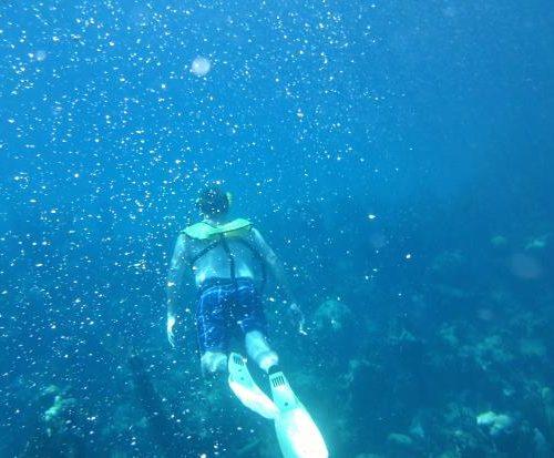 stuart-cove-s-dive-bahamas2