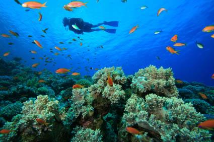 Cabo-Scuba-Diving