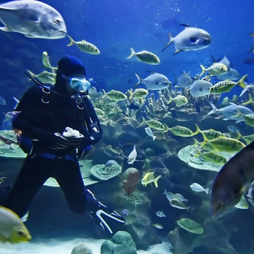 certified-two-tank-dive-cabo-san-lucas-mexico-2
