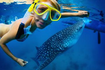 la-paz-whale-shark-snorkeling-tour-and-lunch-from-los-cabos-in-los-cabos-166145