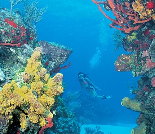 photoEscudo_Diving_in_the_Coral_Reef_Ac_arrecifedecoralcancun