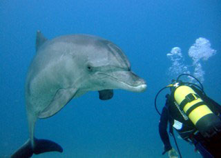 pic-red-sea-diving-with-dolphins